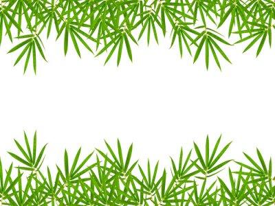 Väggdekor bambu blad isolerad på vit bakgrund