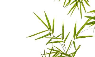 Väggdekor bambu blad isolerad på vit bakgrund, klippning includ