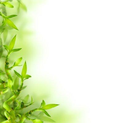 Väggdekor Bambu och gröna blad, bakgrund