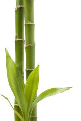 Väggdekor bambu Växt