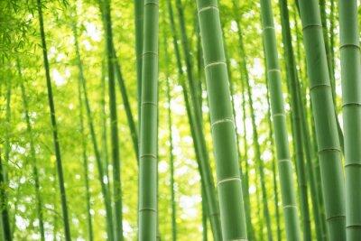 Väggdekor bambuskog