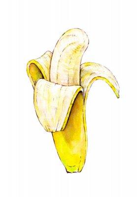 Väggdekor Banana isolerad på vit bakgrund. Vattenfärg färgrik illustration. Tropisk frukt. Handarbete