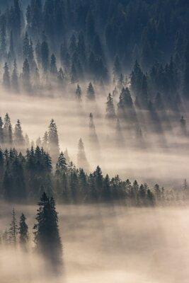 Väggdekor barrskog i dimma berg