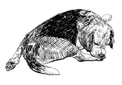 Väggdekor Beagle biter mjukt på det ben.