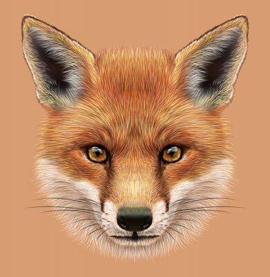 Väggdekor Belysande porträtt av en Red Fox. Den söta fluffiga ansikte skog Fox.