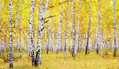 Väggdekor björkhöstskog