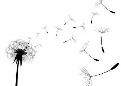 Väggdekor Blås Dandelion på vit bakgrund