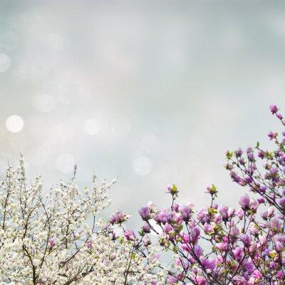 Väggdekor Blommande magnolia träd