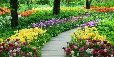 Väggdekor Blommande tulpaner i trädgården