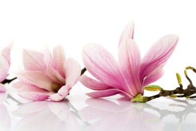 Väggdekor Blommor