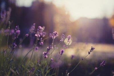Väggdekor blommor närbild