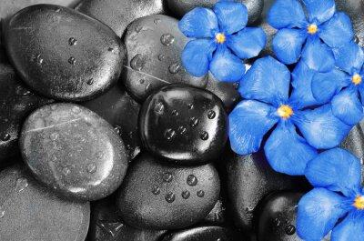 Väggdekor Blommor och stenar