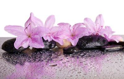 Väggdekor blommor och svarta stenar med eftertanke
