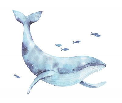 Väggdekor Blue whale watercolor illustration isolated on white. Big wild underwater animal beautiful blue violet white watercolor whale ballena painting. Mammal marine or oceanic water animal swimming.