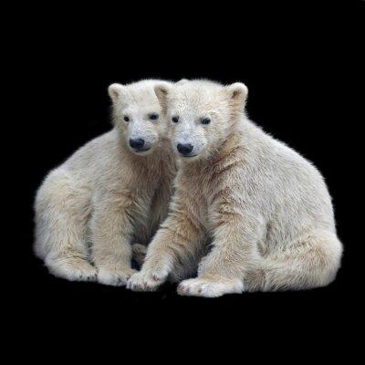 Väggdekor Brödraskap isbjörnsungar