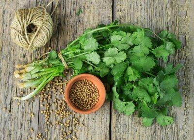 Väggdekor Bunch färsk koriander och korianderfrön