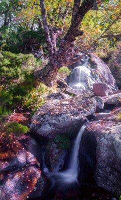 Väggdekor Cascada y viejo Abedul, Serra dos Ancares, Lugo, Galicien
