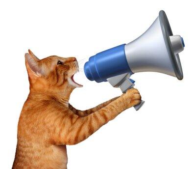 Väggdekor Cat Meddelande