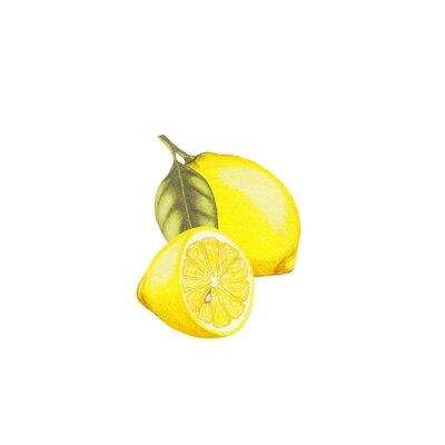 Väggdekor citron illustration