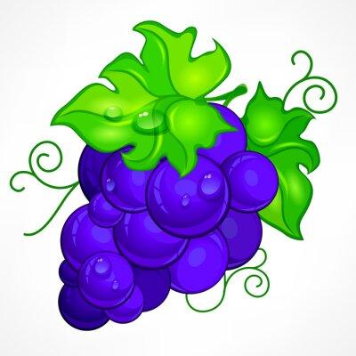 Väggdekor Cluster blå druvor med gröna blad och släppa vatten på vitt,
