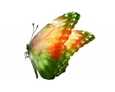 Väggdekor Color butterfly , isolated on white background