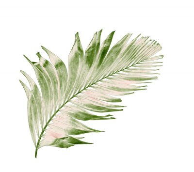 Väggdekor concept summer with green palm leaf from tropical . frond floral leaves branches tree isolated on white pattern background. flat lay, top view.