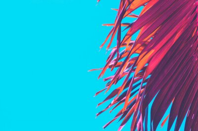Väggdekor Copy space pink tropical palm tree on sky abstract background. Summer vacation and nature travel adventure concept.
