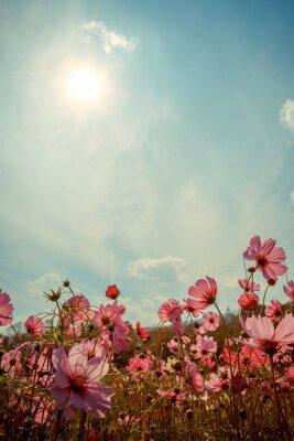 Väggdekor Cosmos blommor i trädgården