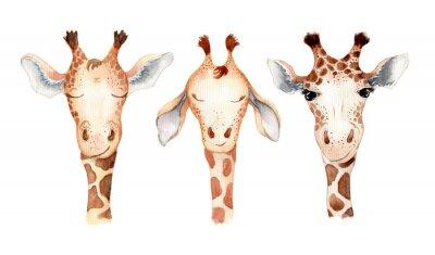 Väggdekor Cute giraffe cartoon watercolor illustration animal set