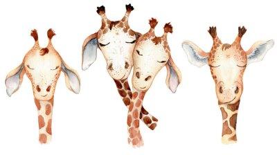 Väggdekor Cute giraffes couple cartoon watercolor illustration animal set