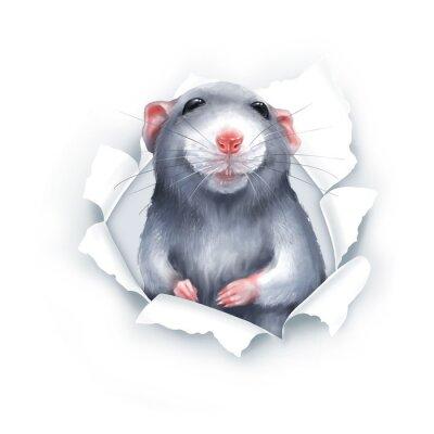 Väggdekor Cute gray cartoon rat, paper breakthrough, digital painting