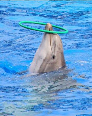 Väggdekor dauphin