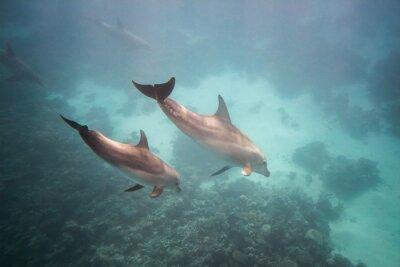 Väggdekor Delfin under vatten