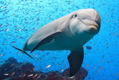 Väggdekor delfin under vattnet på rev bakgrund
