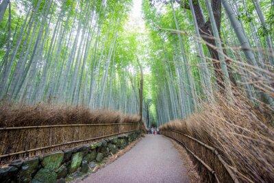 Väggdekor Den Arashiyama Bamboo Grove i Kyoto, Japan.