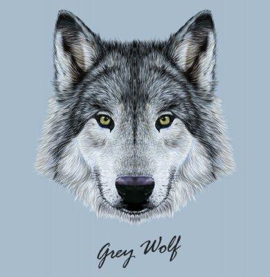 Väggdekor Digital vektor illustration porträtt av en varg.
