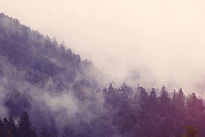 Väggdekor Dimma i skogen