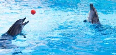 Väggdekor Dolphins spela bollar