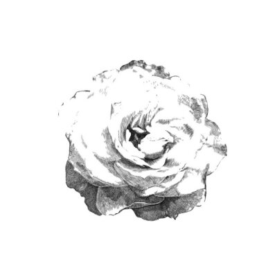 Väggdekor dras ros