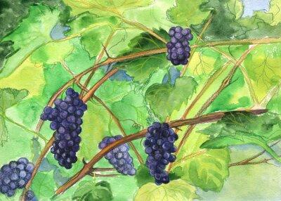 Väggdekor Druvor, vin. akvarellmålning