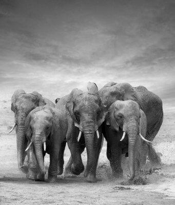 Väggdekor Elefant