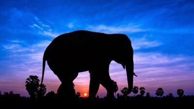 Väggdekor Elefant andpPalm träd på skymningen tid