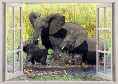 Väggdekor elefanter