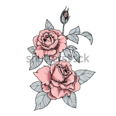 Väggdekor Elegant vinjett med rosa rosor. Handritad isolerad vektorillustration i vintagestil