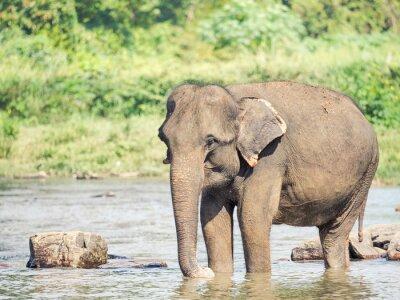 Väggdekor Elephatnt