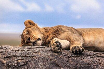 Väggdekor En lejoninna sova på berget i Serengeti NP, Tanzania, Afrika
