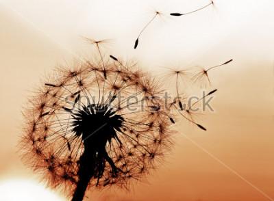 Väggdekor En maskros blåser frön i find.