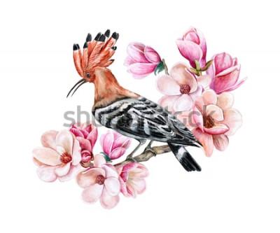 Väggdekor Fågelhoopoe som sitter på en blommande vårfilial. Magnolia blommor. Vattenfärg. Illustration. Mall. ClipArt. Närbild. Kort