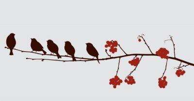 Väggdekor fåglar på rönn gren