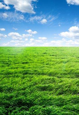 Väggdekor fält av gräs och perfekt himmel
